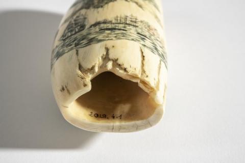 Dent de cachalot, photo Lysiane Gauthier, mairie de Bordeaux